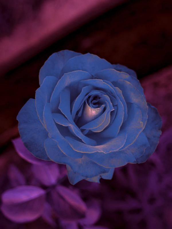 estelarflower.jpg