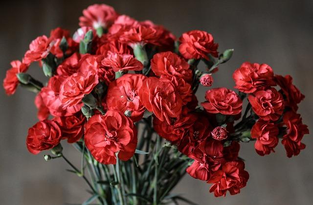 carnation-1488929_640.jpg