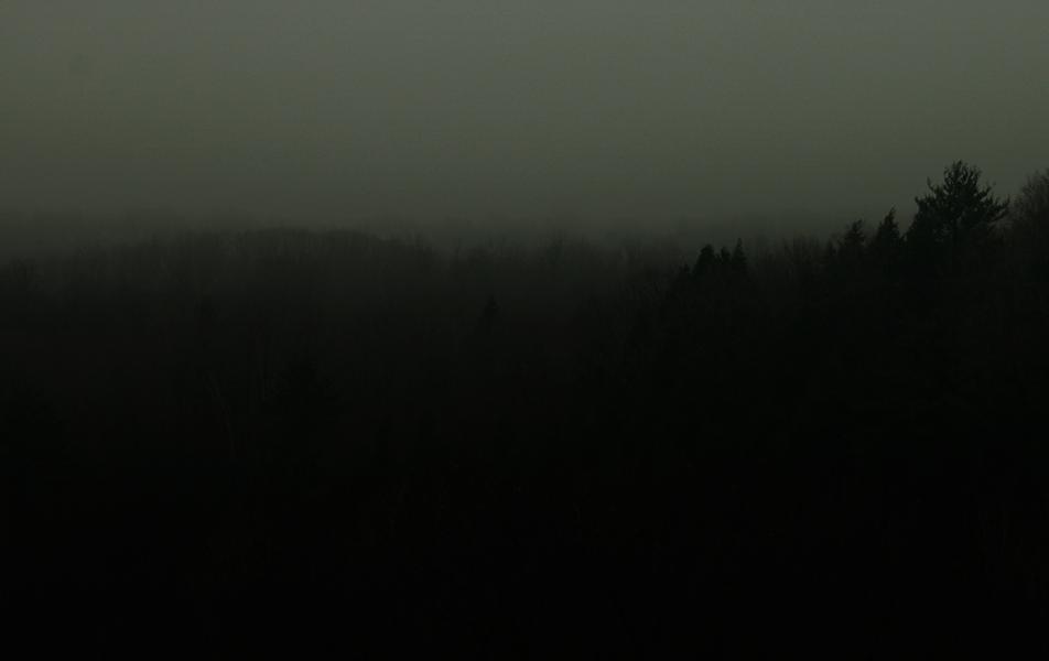 darkforest.png