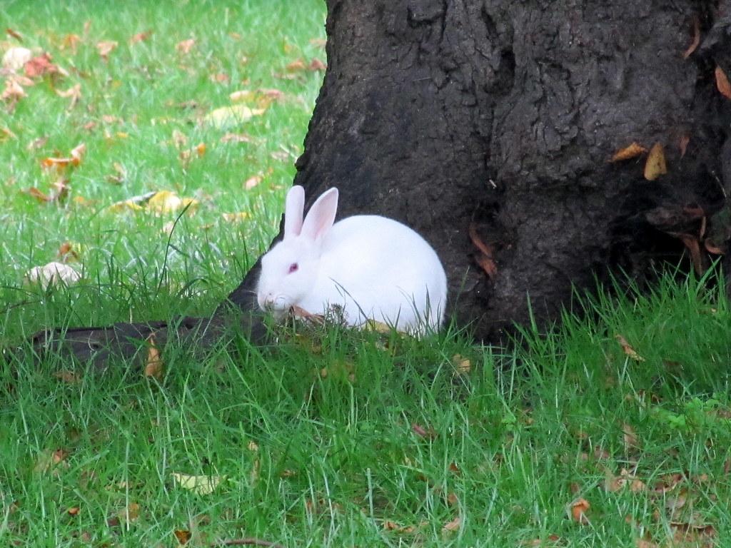scprabbit.jpg
