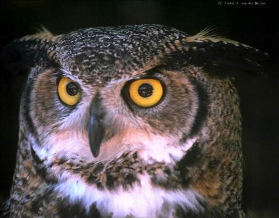 B_owl-face.jpg