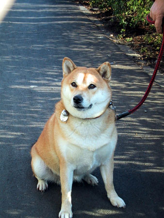Dog20110929_2.jpg